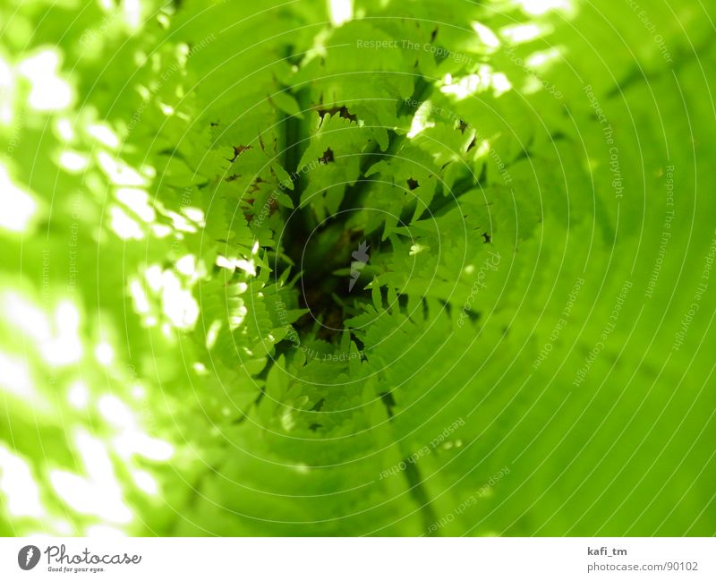 fern Green Spring Plant Fresh Tunnel Pteridopsida Circle Macro (Extreme close-up)