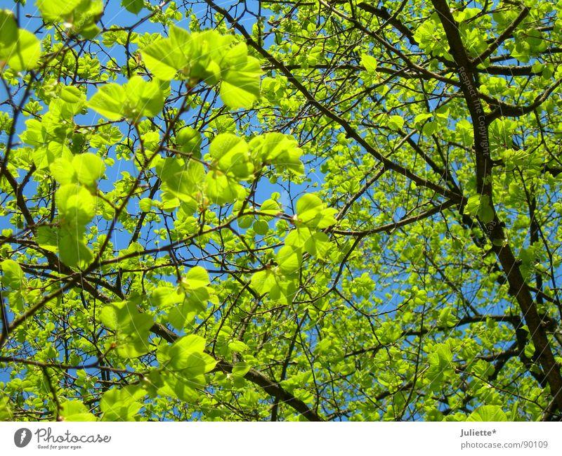 Nature Tree Green Leaf Life Spring Fresh Branch