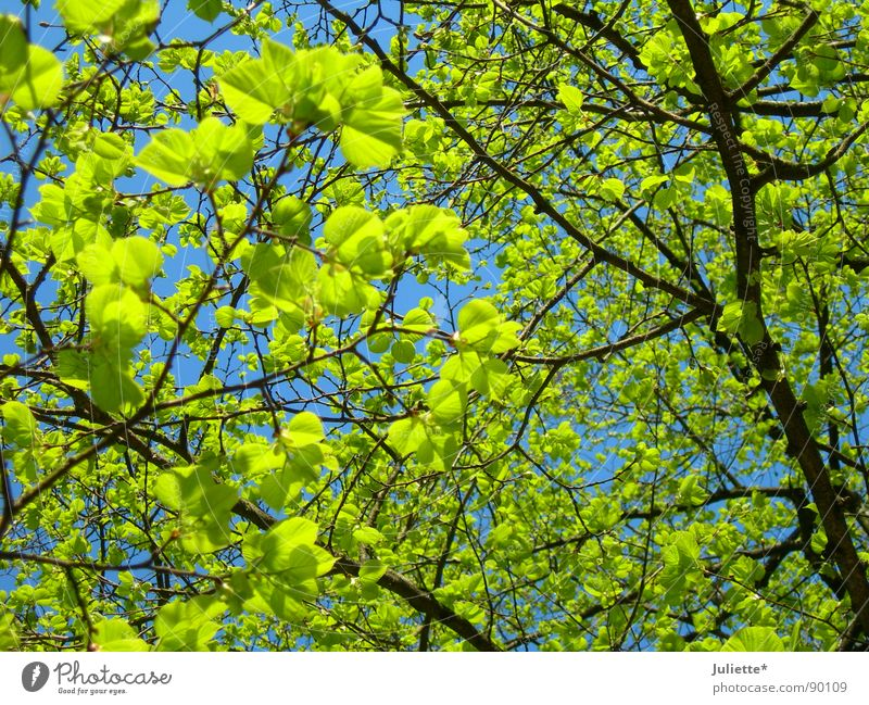 Nature Tree Green Leaf Life Spring Fresh Branch