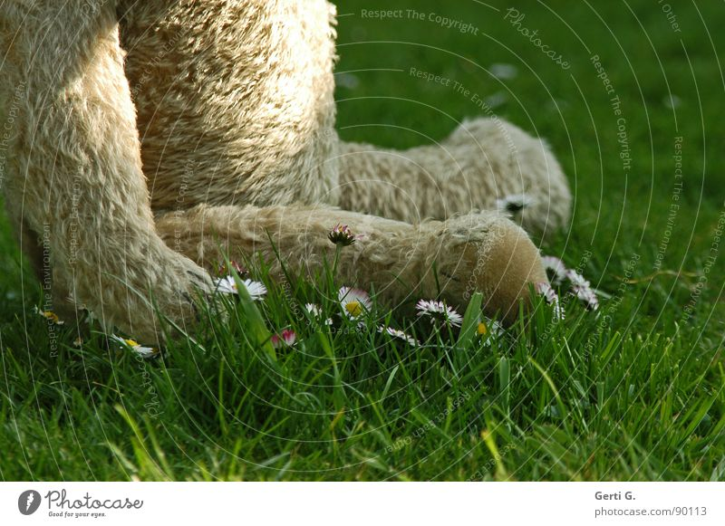 Flower Animal Relaxation Meadow Playing Grass Leisure and hobbies Sit Wait Lawn Pelt Toys Blade of grass Daisy Cuddly Partially visible