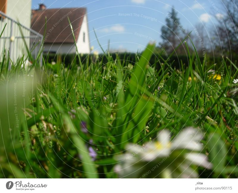 worm's-eye view Green Grass House (Residential Structure) Under Worm's-eye view Spring Summer Beautiful Daisy Fence Fir tree Clouds Blue fair weather Sky