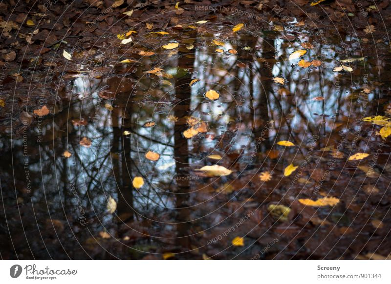 Autumn wet Nature Plant Earth Water Sky Rain Leaf Forest Wet Blue Brown Yellow Moody Calm Puddle Reflection Woodground Colour photo Detail Deserted Day