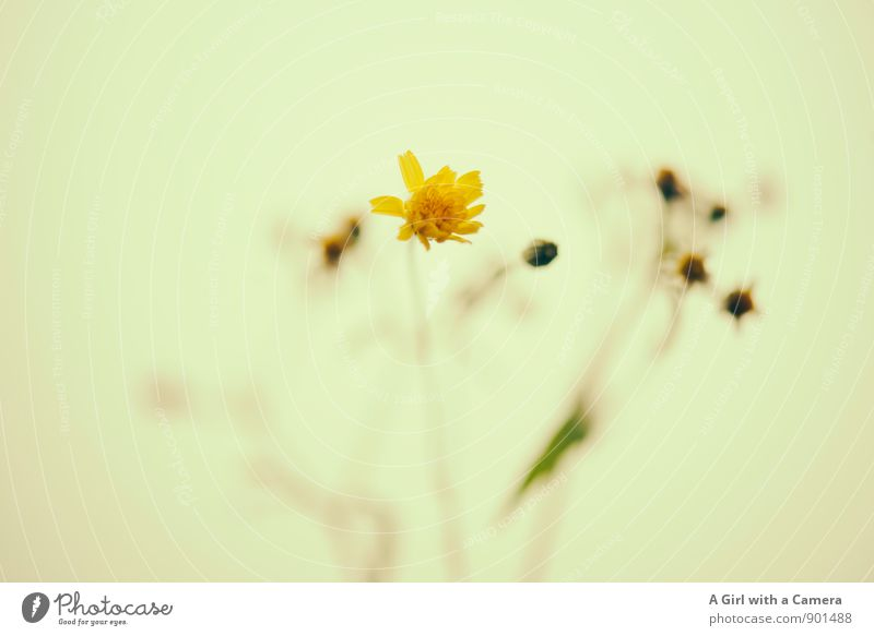 Nature Plant Flower Environment Yellow Warmth Autumn Small Happiness Cute Blossoming Friendliness Pleasant