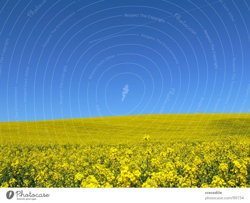Sky Vacation & Travel Yellow Spring Freedom Ice Field Flying Stripe Stalk Blossoming Agriculture Exhaust gas Beautiful weather Organic produce Production