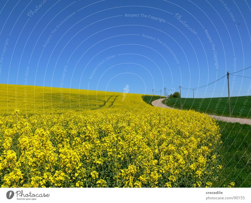 rap #9 Electricity pylon Meadow Grass Curved Stripe Tracks Horizon Vacation & Travel Canola Field Spring Diesel Carbon dioxide Climate change Yellow Stalk