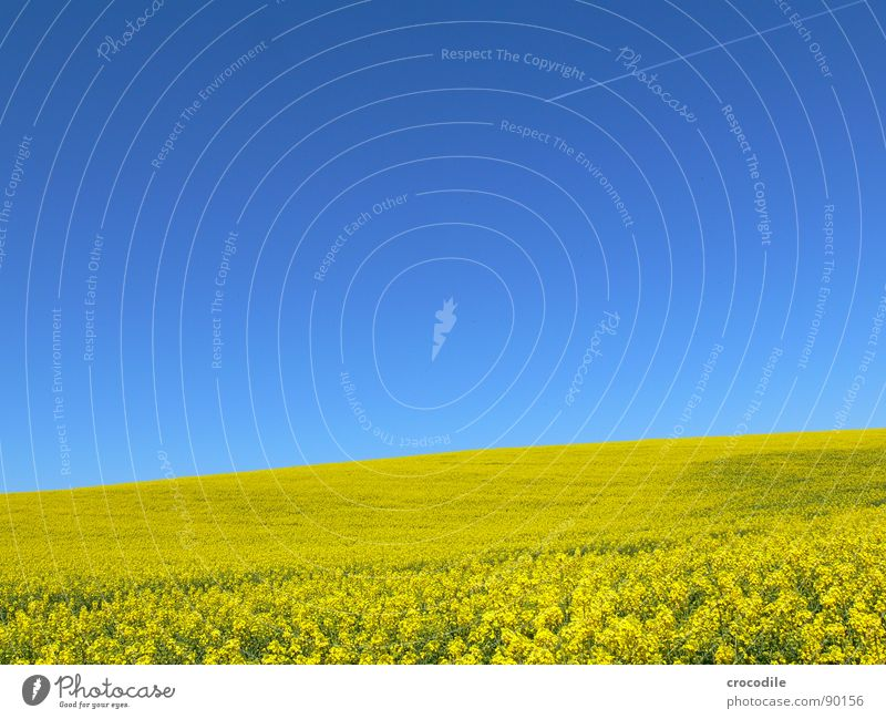Sky Vacation & Travel Yellow Spring Freedom Ice Field Flying Horizon Stripe Infinity Stalk Blossoming Agriculture Beautiful weather Organic produce