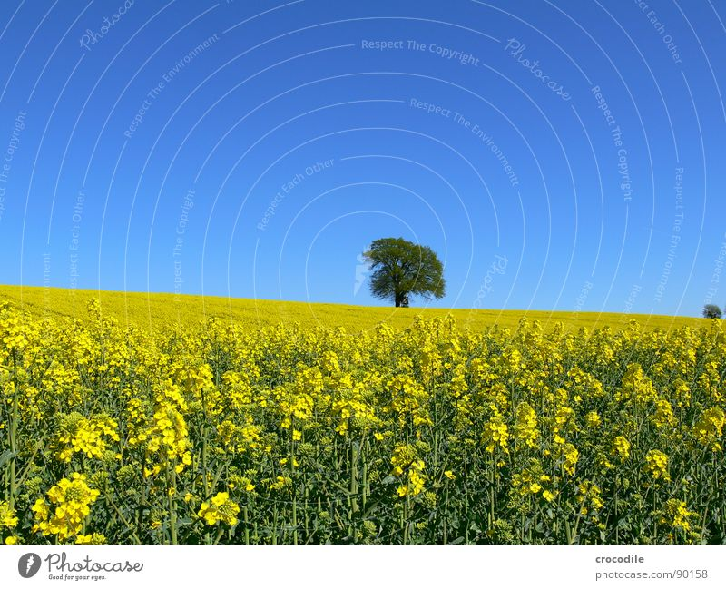 Sky Tree Loneliness Yellow Spring Field Horizon Stripe Stalk Blossoming Agriculture Tree trunk Beautiful weather Ecological Organic produce Production