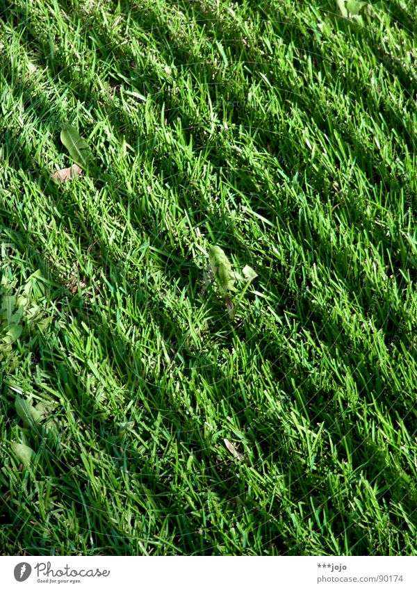 Green strip Grass Stripe Meadow Green space Football pitch Park Blade of grass Fresh Spring Zebra Striped Dark grass verge Lawn Colour english speed Shadow