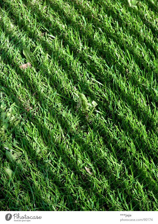Green strip Grass Stripe Meadow Green space Football pitch Park Blade of grass Fresh Spring Zebra Striped Dark grass verge Lawn Colour english speed Shadow