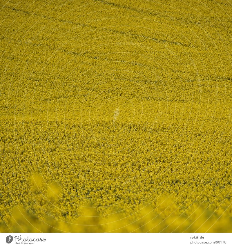 Total Rape Desert Yellow Canola Tracks Parallel Field Bio-diesel Middle Infinity Carbon dioxide Exit route Fear Panic useful plant Odor Upward Downward