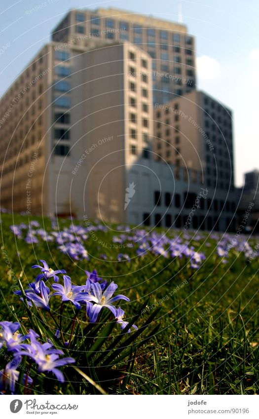 Nature vs. Man Potsdamer Platz Building Flower Flower meadow Meadow Green space Violet House (Residential Structure) Town Café Chic Fine Might Cold Architecture