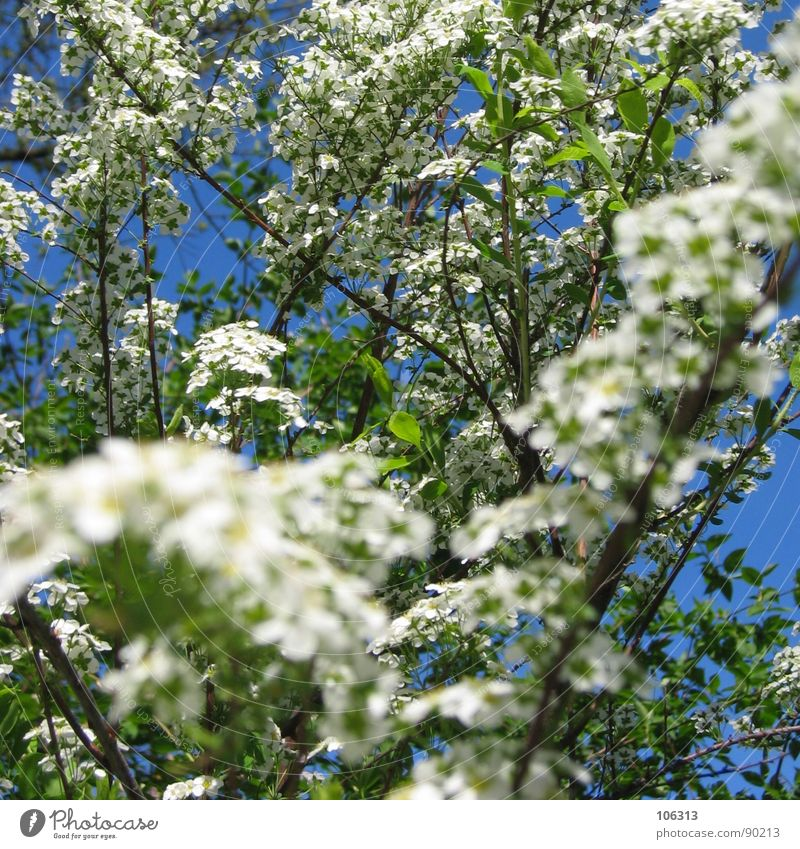 Nature Sky White Tree Flower Green Plant Clouds Relaxation Blossom Spring Garden Park Wait Fruit Growth