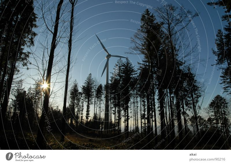 Sky Forest Line Perspective Energy industry Electricity Technology Wind energy plant Geometry Paradise Clearing Site Sky blue Deciduous tree Coniferous trees