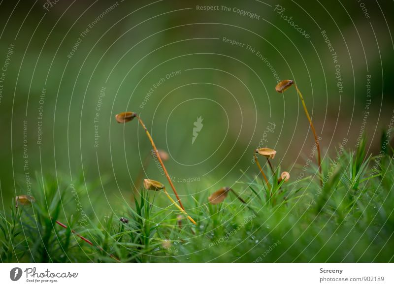 Golf club disposal Nature Landscape Plant Autumn Moss Forest Small Brown Green Serene Calm Colour photo Exterior shot Macro (Extreme close-up) Deserted Day