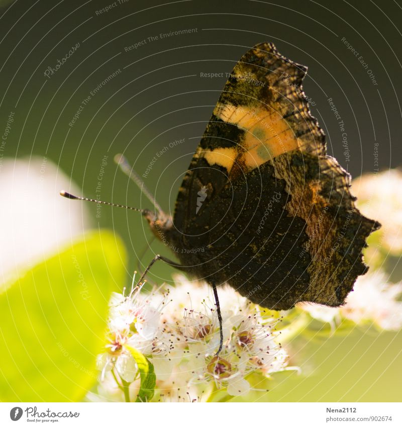 Nature Plant Summer Leaf Animal Forest Environment Autumn Meadow Blossom Garden Flying Air Park Sit Wing