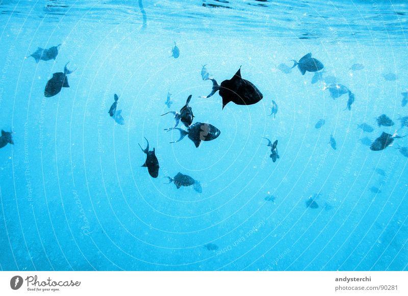 Water Ocean Animal Wet Free Fish Multiple Asia Dive Deep Maldives Flock Snorkeling Pack Sea water