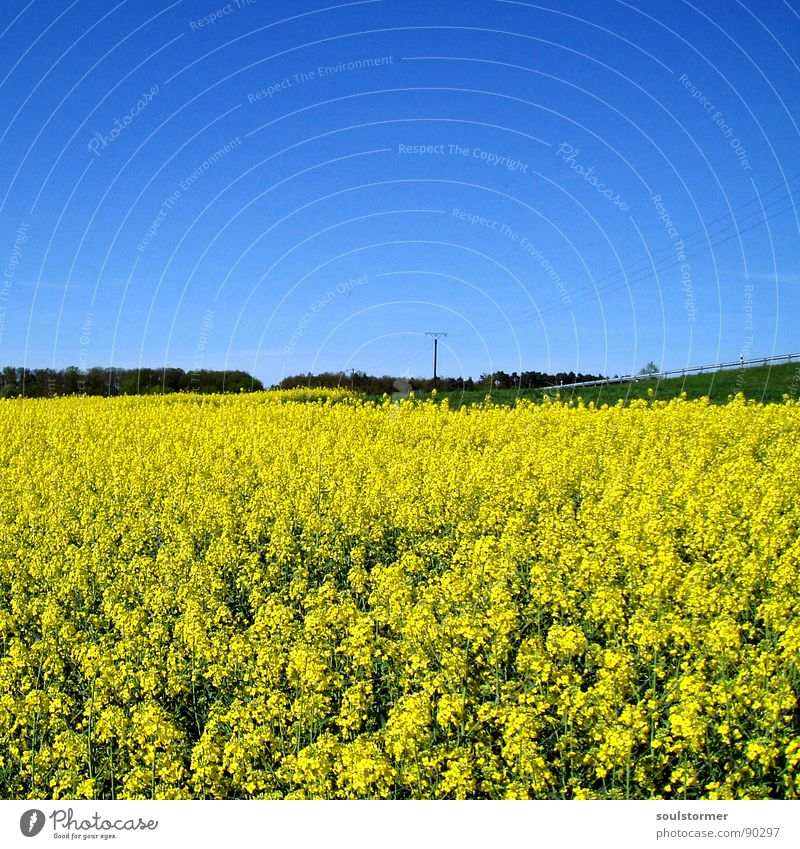 off the beaten track... Yellow Green Canola Electricity pylon Meadow Clouds Spring Blossom Flower Field Canola field Tree Crash barrier Break Relaxation Calm