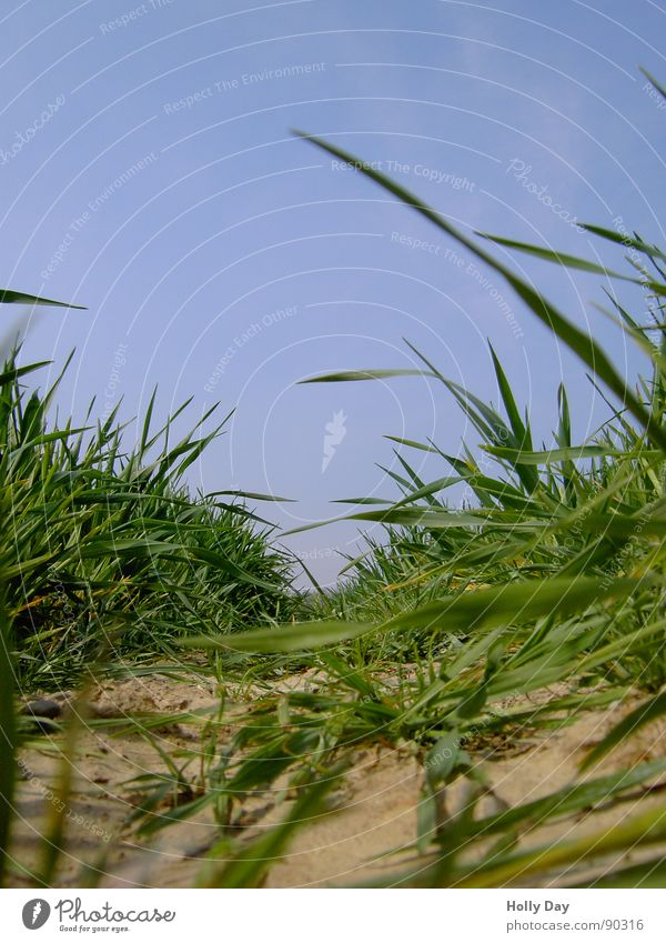 Sky Blue Grass Spring Brown Field Earth Tracks Grain Dry Blade of grass Tractor