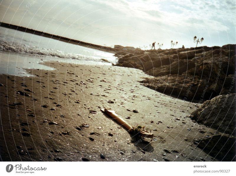 Saintes Maries de la Mer Ocean Beach Winter South France Analog Earth Sand Calm Sun End Guitar Colour