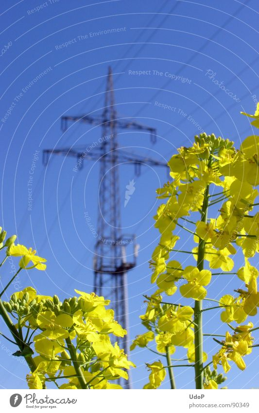 Nature Sky Blue Yellow Blossom Spring Industry Energy industry Electricity Electricity pylon Canola Oilseed rape oil