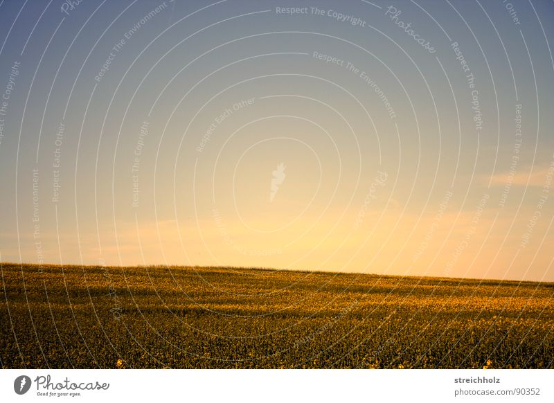 celestial field Canola Ear of corn Field Optimism White Paradise Farmer's wife Hope Sky Freedom Wheat beer Perspective Agriculture Seed Planter Meadow