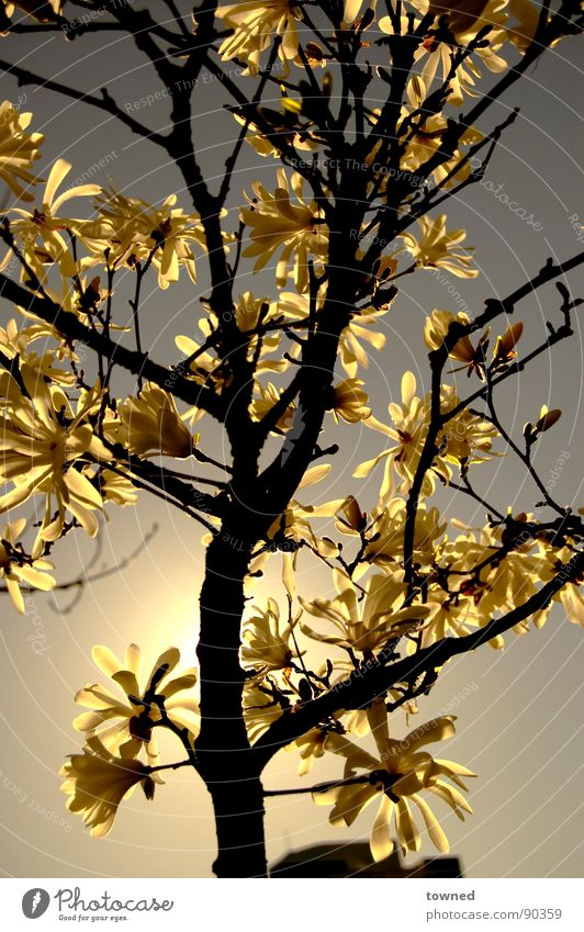 natures e-clips Sunset Nature flower tree sun sunlight beautiful growth shadow shade Surrealism branch bloom leaf