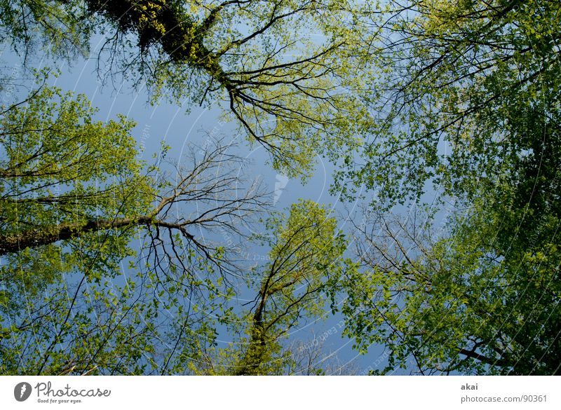 Heaven on earth 13 Sky Coniferous trees Forest Sky blue Geometry Deciduous tree Perspective Coniferous forest Deciduous forest Glade Paradise Clearing Calm