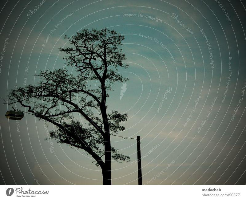 Sky Tree Blue Lamp Horizon Idyll Lantern Twig