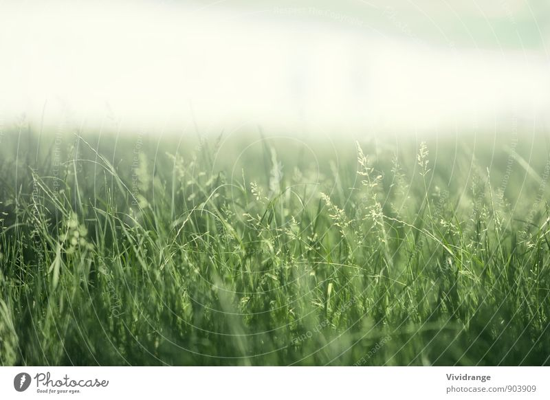 Green Field Life Relaxation Summer Garden Nature Landscape Spring Fog Flower Grass Park Meadow Soft White Romance Afternoon close London United Kingdom Detail