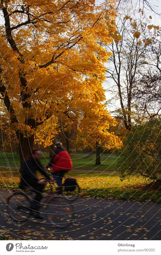 Human being Tree Leaf Yellow Autumn Lanes & trails Orange Gold Speed Decline Rich Hannover Colorless Against each other