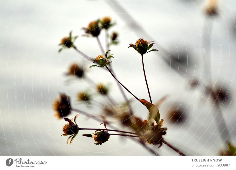 Ausblüht - Where Have All The Flowers Gone... Nature Plant Water Autumn Beautiful weather Fog Grass Leaf Blossom Foliage plant Wild plant Waves River bank Lake