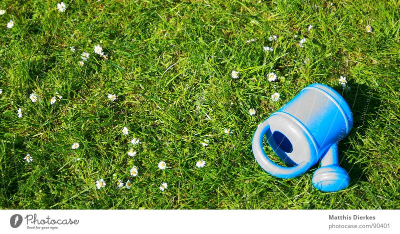 watering can Watering can Summer Daisy Meadow Vacation & Travel Closing time Playing Leisure and hobbies Beautiful Calm Joy Garden Blue Lawn Relaxation Funny