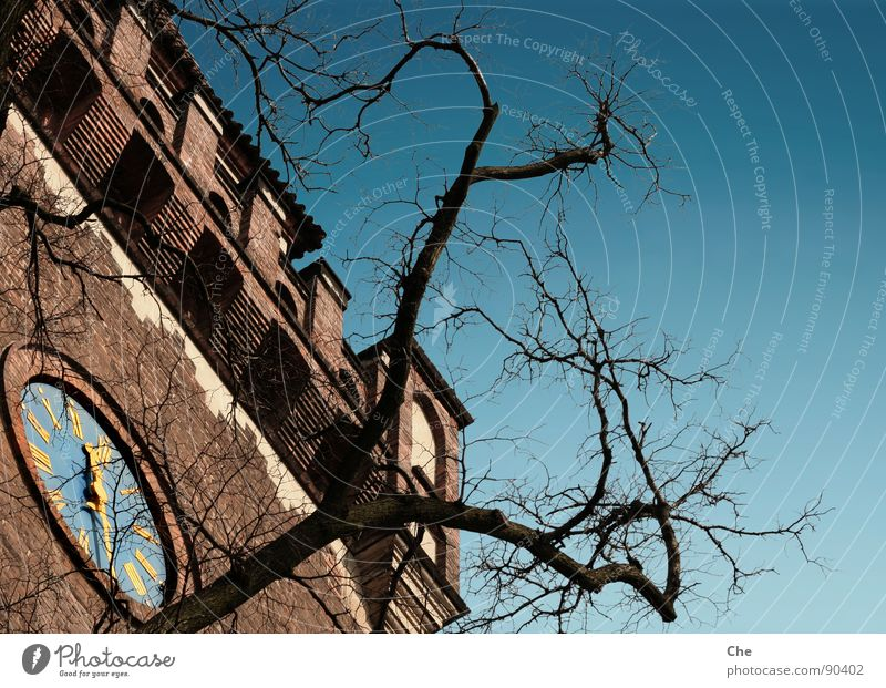 Sky Old Blue Tree Summer Black Life Autumn Wall (barrier) Stone Time Gold Tall Clock Transience Digits and numbers