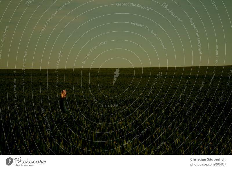 HI5 Meadow Field Horizon Hand Fingers Green Grass Spring Sky Blue