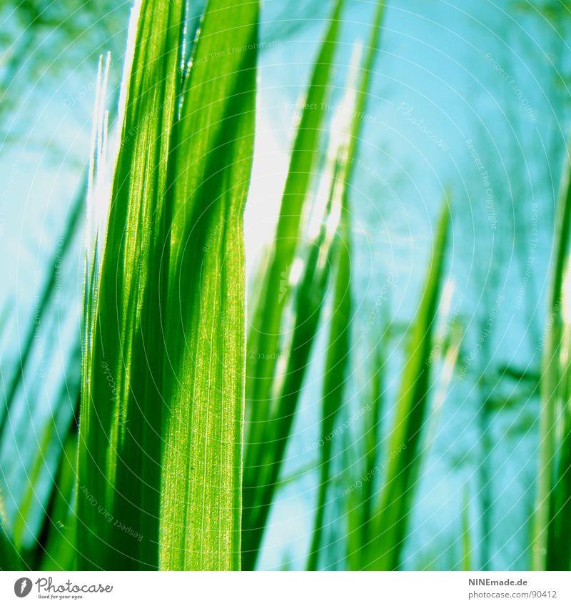 Nature Sky Tree Sun Green Blue Summer Grass Spring Garden Contentment Glittering Weather Tall Crazy Fresh