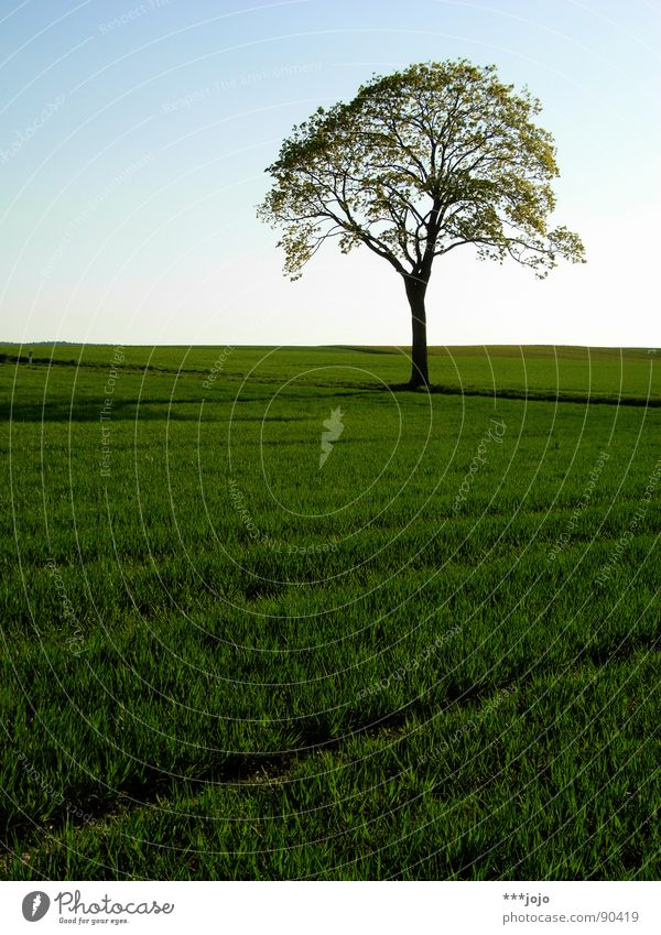 Beautiful Tree Green Leaf Jump Spring Warmth Landscape Field Growth Strong Juicy Wheat Pampa