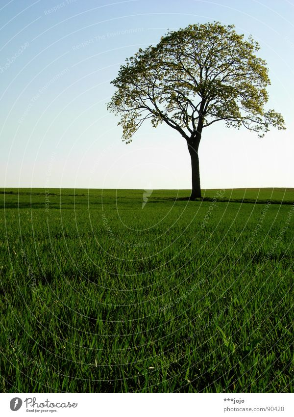 Beautiful Tree Green Leaf Jump Spring Warmth Landscape Field Growth Strong Juicy Wheat Argentina Pampa