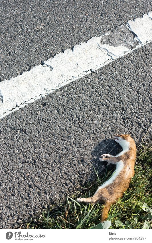 Animal Environment Sadness Street Grass Lanes & trails Death Line Lie Wild animal Transport Threat Stripe Transience Change Risk