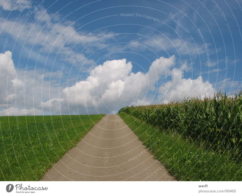 The way goes on Clouds Horizon Hope Future Release Think Thought Exterior shot Meadow Maize field Sky Summer Trust Lanes & trails Landscape Target Life Bright