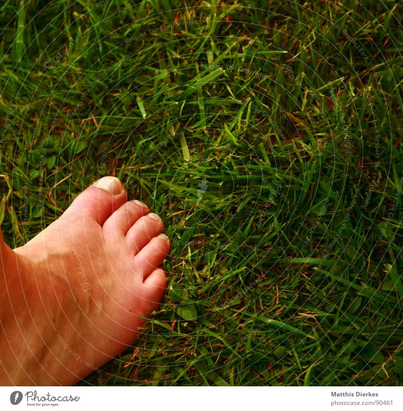 garden Barefoot Summer Toes Meadow Leisure and hobbies Vacation & Travel Closing time Joy Feet Garden Freedom Warmth Relaxation