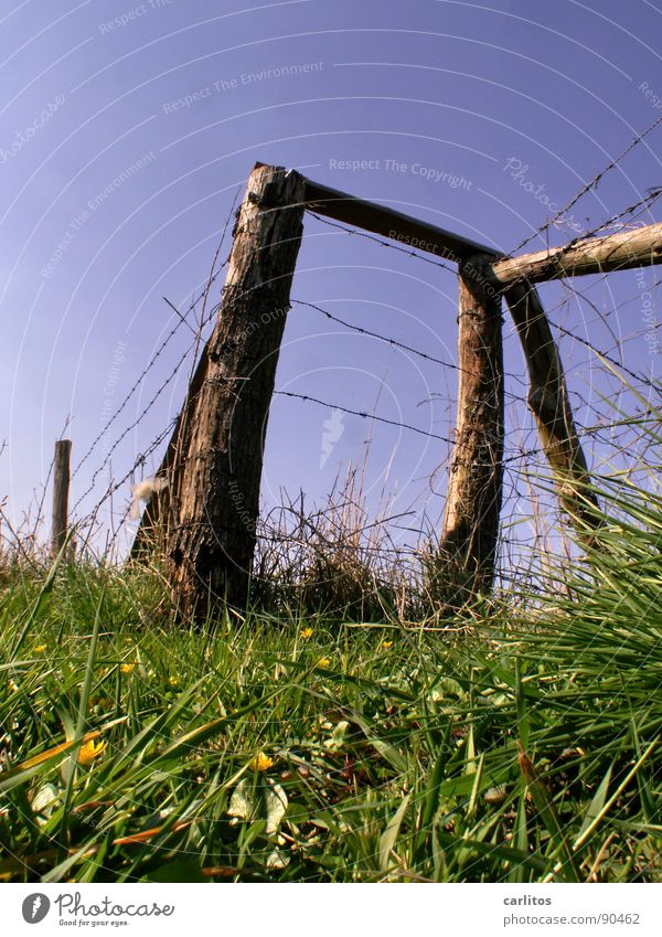Spring Fresh Agriculture Border Pasture Fence Wire Pole Juicy Limit Barbed wire Limitation Pasture fence
