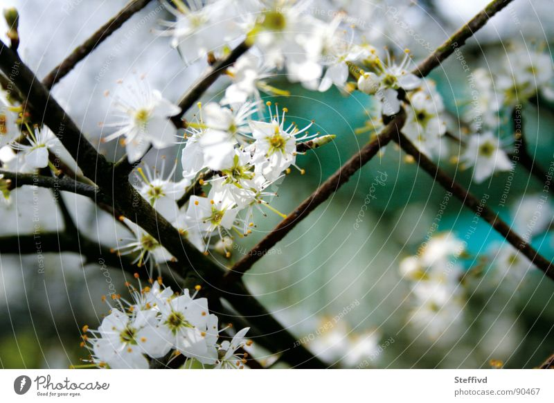 flower fence Fence Spring Blossom Pollen Wake up Garden Nature Contrast Rust