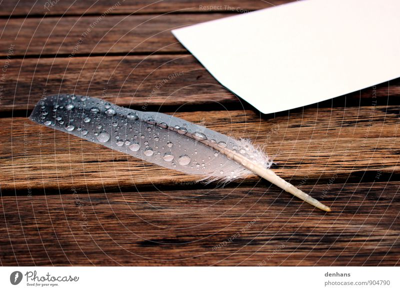 Old Water Calm Sadness Wood Art Brown Dream Rain Drops of water Feather Wet Table Study Paper Grief