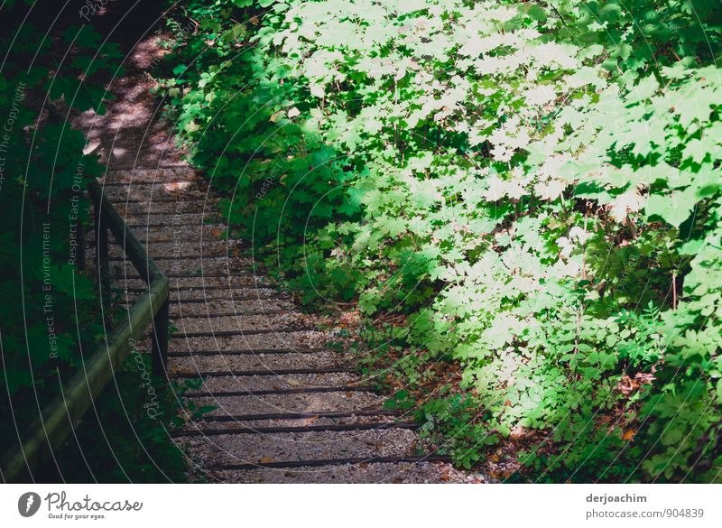 Nature Green Summer Relaxation Leaf Calm Forest Movement Gray Stone Going Contentment Stairs Esthetic Walking Uniqueness