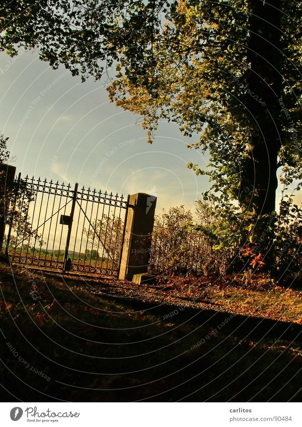 Closed II Gate Cemetery Calm Eternity Infinity Rest Death Worm's-eye view Back-light Wrought iron Wrought ironwork Pole Religion and faith Autumn Autumn leaves