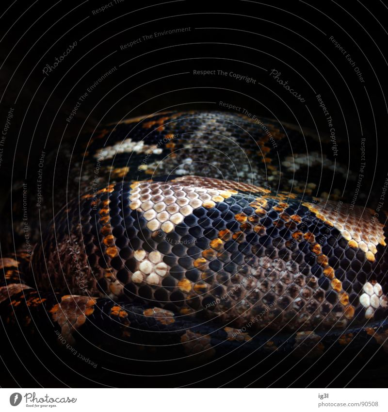 snake mosaic Zoo Berlin zoo Animal Bend Supple Pattern Point of light Tile Mosaic Tartlet Part Seeming Dangerous Stationary Background picture Black Dark
