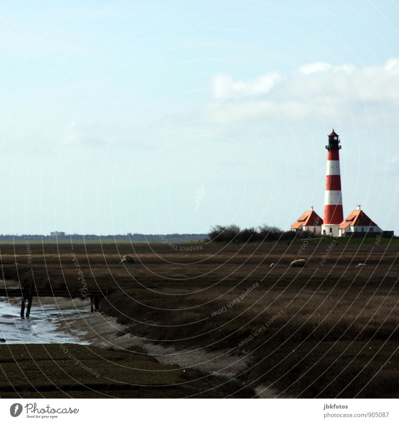 Nature Plant Water Landscape Animal Environment Autumn Coast Germany Europe Group of animals Bridge Elements Beer Monument North Sea