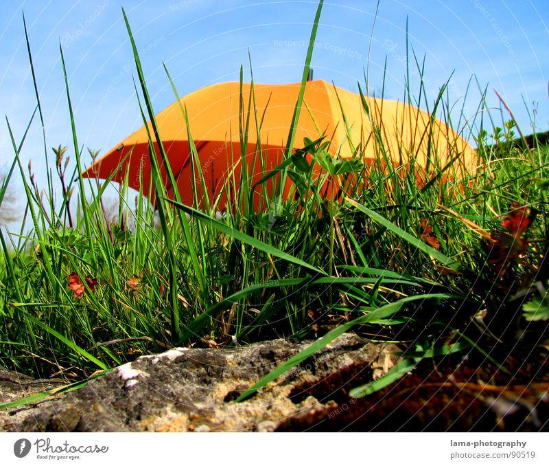 Nature Sky Green Blue Plant Summer Clouds Colour Meadow Grass Spring Garden Stone Rain Landscape Bright