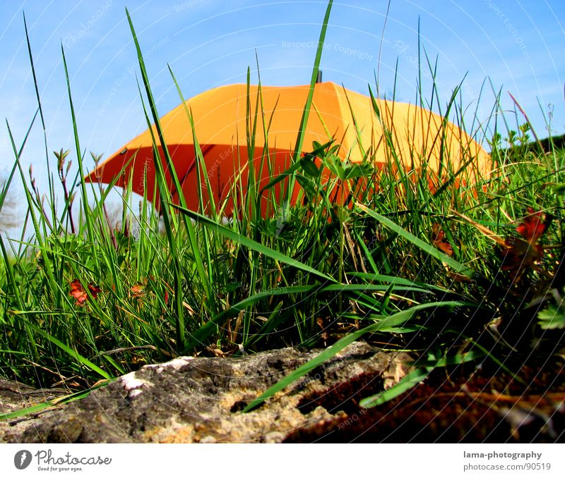 unknown flying object Cloppenburg Umbrella Sunshade Storm Clouds Grass Blade of grass Meadow Summer Field Green Spring Flower meadow Environment Summery Plant