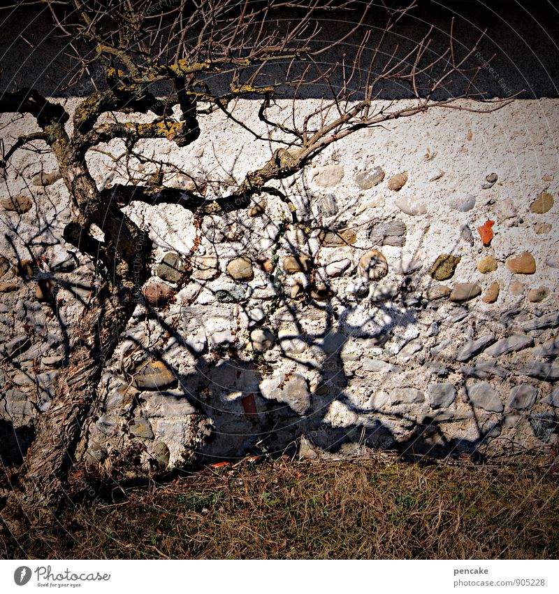 !trash! | I'm gonna be a shadowy existence. Nature Winter Tree Sign Poverty Authentic Trashy Death Wall (barrier) Colour photo Subdued colour Exterior shot